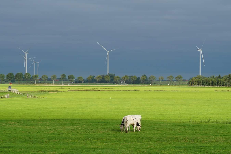 Hoe de nederlandse wind u helpt energiekosten besparen